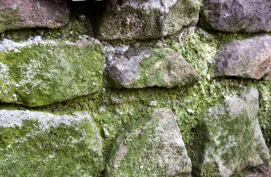 Stone Retaining Wall Covered in Green Moss